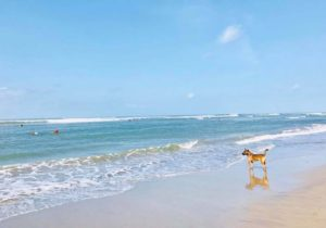 bali_beach&wanko