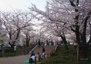 tokyo_asakusa_sumidagawa_sakura_5