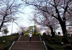 tokyo_asakusa_sumidagawa_sakura_skytree